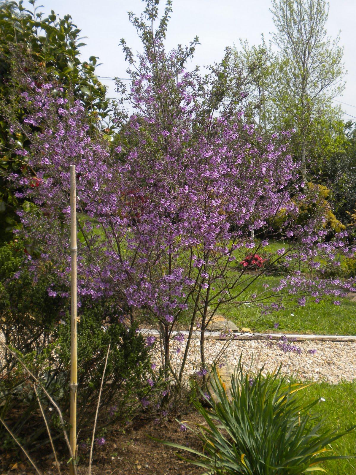 El jard n de margarita arbustos con aroma for Arbustos de jardin nombres
