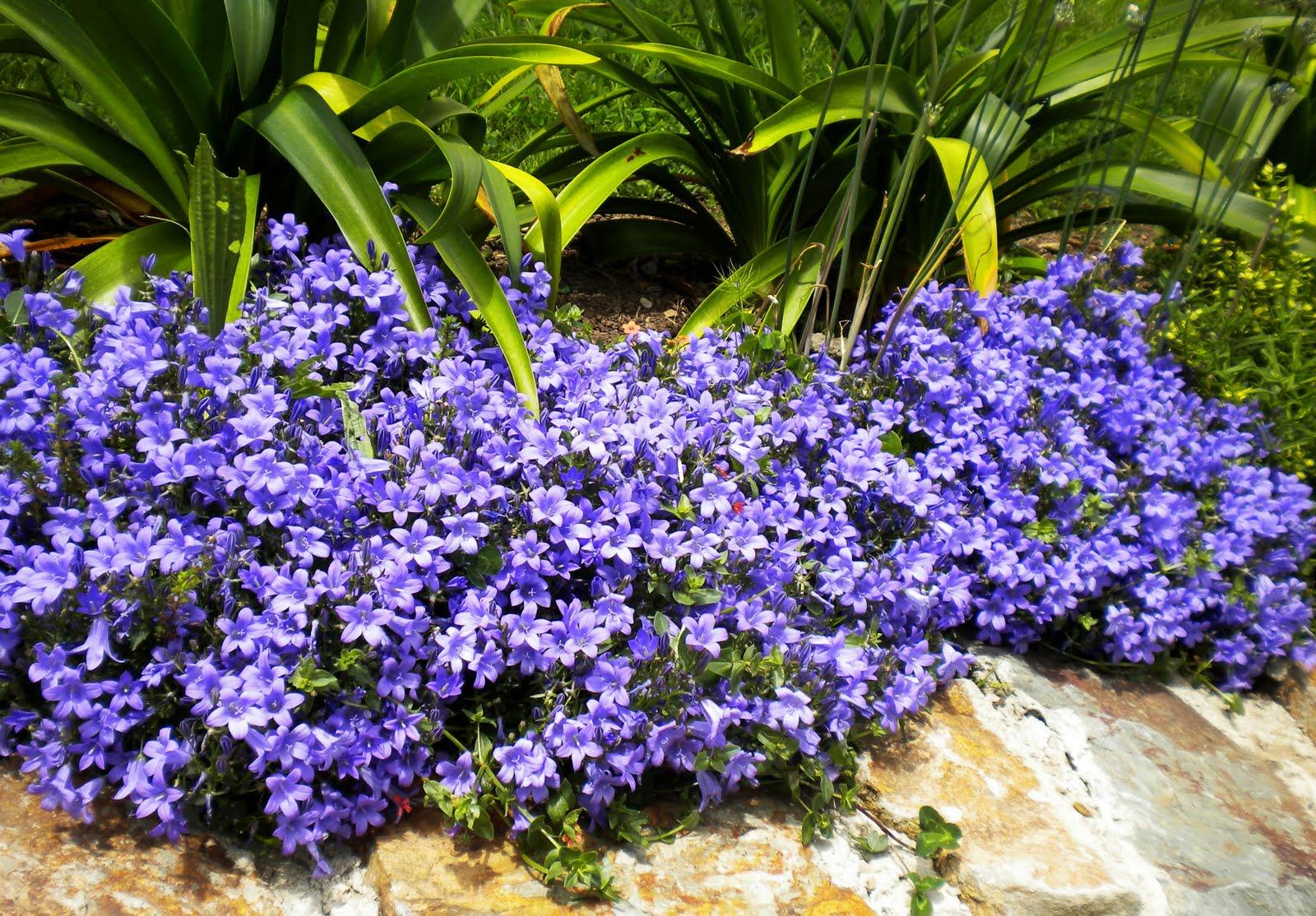 El jard n de margarita herb ceas - Plantas para el jardin todo el ano ...