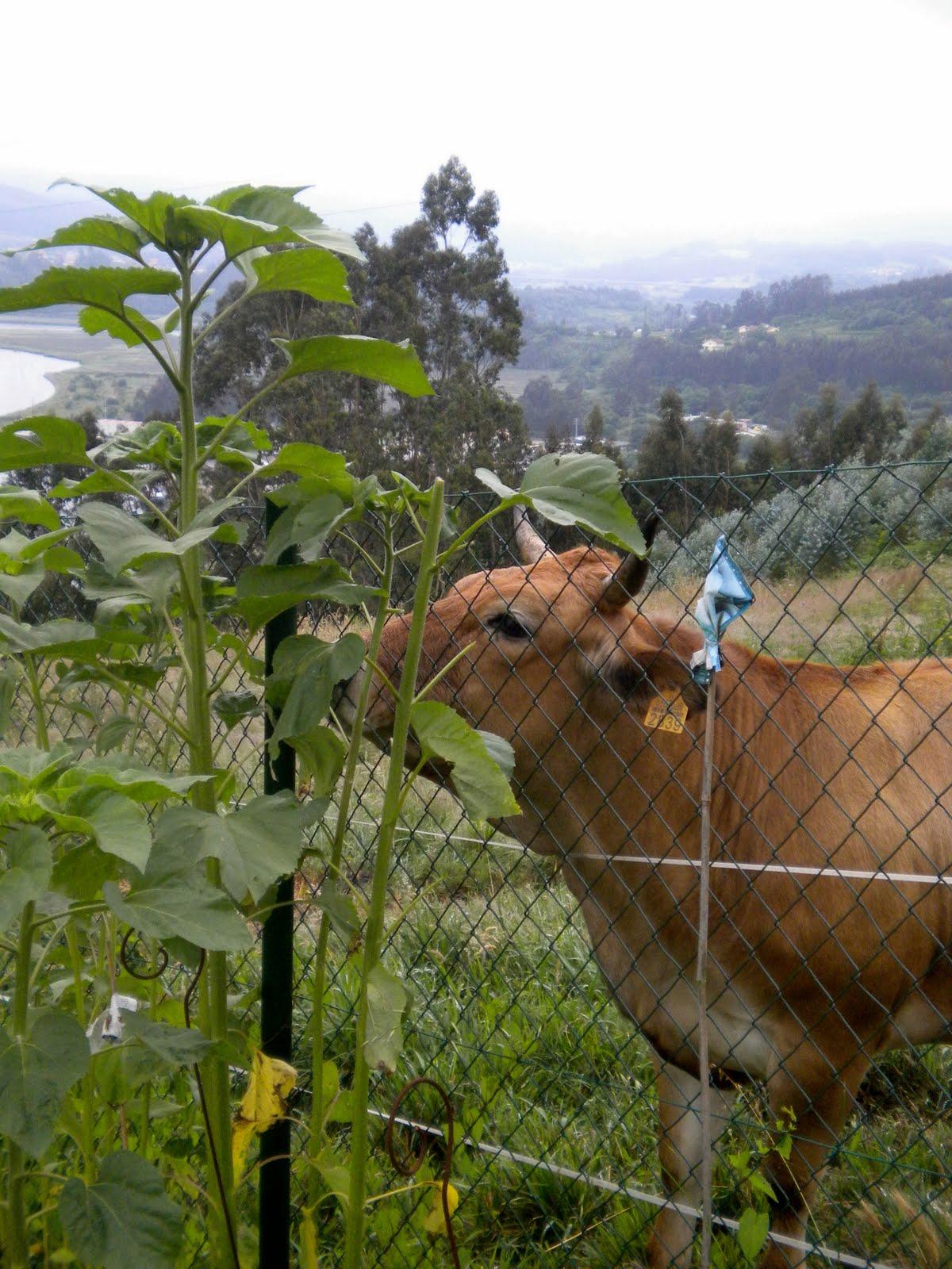 El jard n de margarita la vaca for Vacas decorativas para jardin