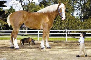 مــوسوعة العجائب الغرائب الاكبر على horse2.jpg