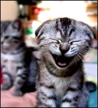 Frases muy graciosas para reirse un buen rato! risas