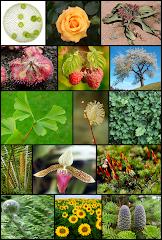 Keajaiban Alam Tumbuhan