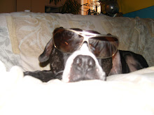 It's true: a dog can be a cool cat