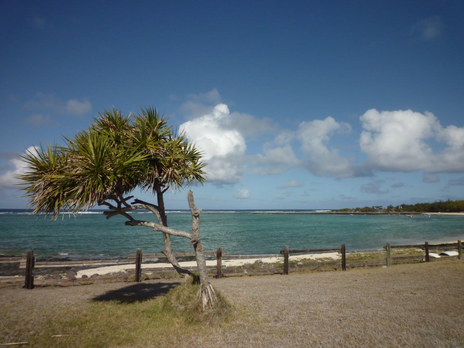 Mayotte Papyllon L 238 Le Rodrigues 25 Dec 2010 1er Jan 2011 border=