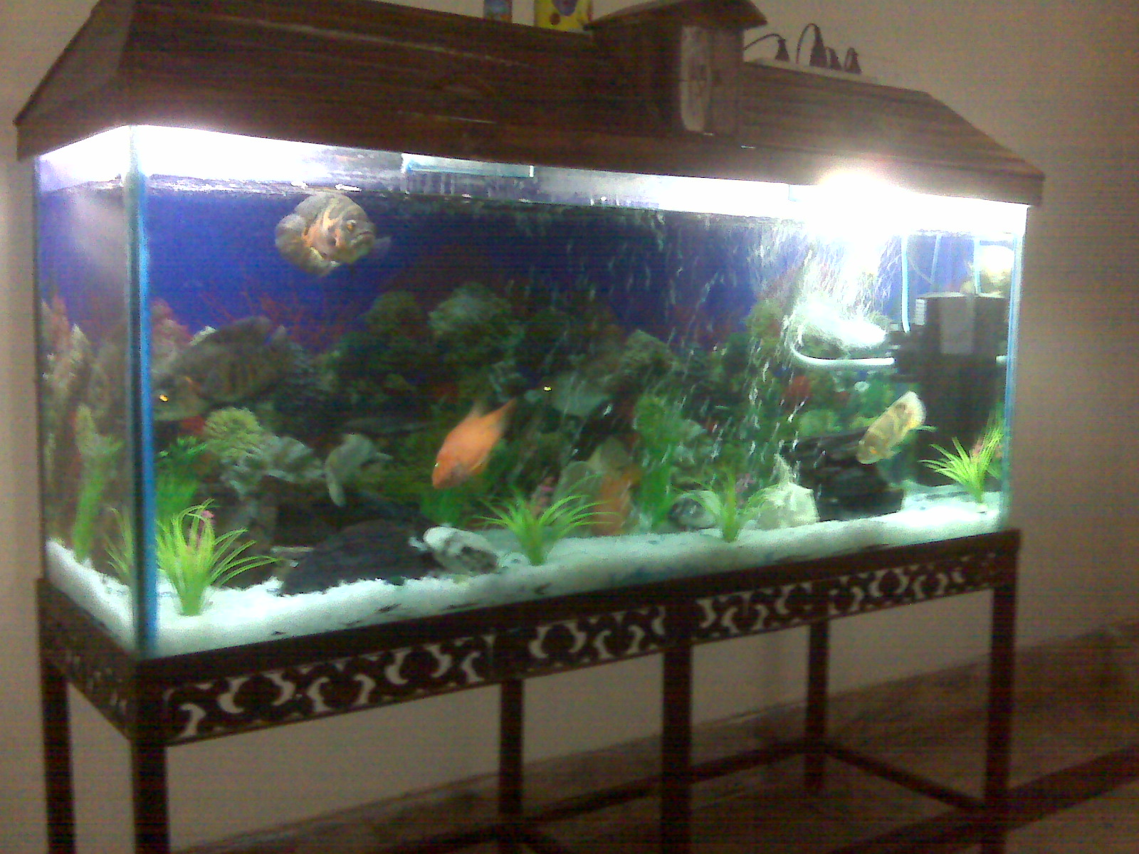Fish aquarium for sale in lahore -  Feet Aquarium For Sale At A Very Genuine Price Fish
