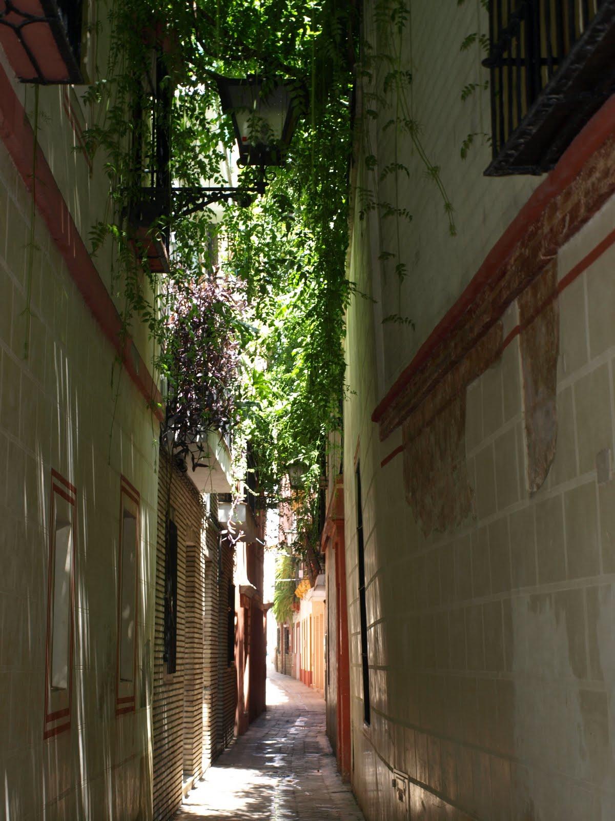 Sevilla daily photo la calle verde - Calle correduria sevilla ...