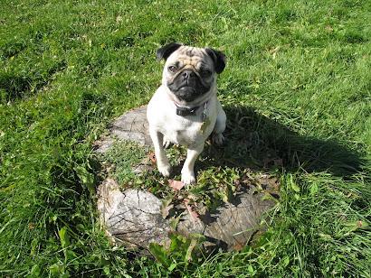 Lola Posing the Park