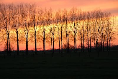 Foto by H.W. de Nijs (c) 2010
