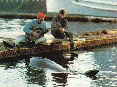 whale, cousteau, claire nereim