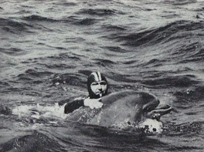 dolphin, cousteau, claire nereim