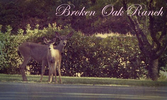 Broken Oak Ranch