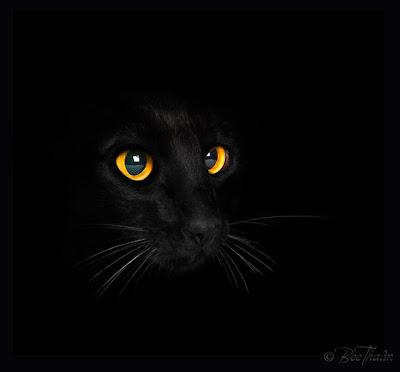The Black Cat Theme Of Guilt