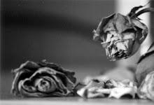 """disperdicio da vida""""imagine se você tivesse que reviver a sua vida varias e varias vezes"""""""