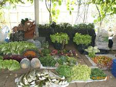 Hasil panen kebun yang akan dibawa ke Jakarta setiap senin dan kamis.