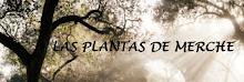 MI BLOG DE PLANTAS