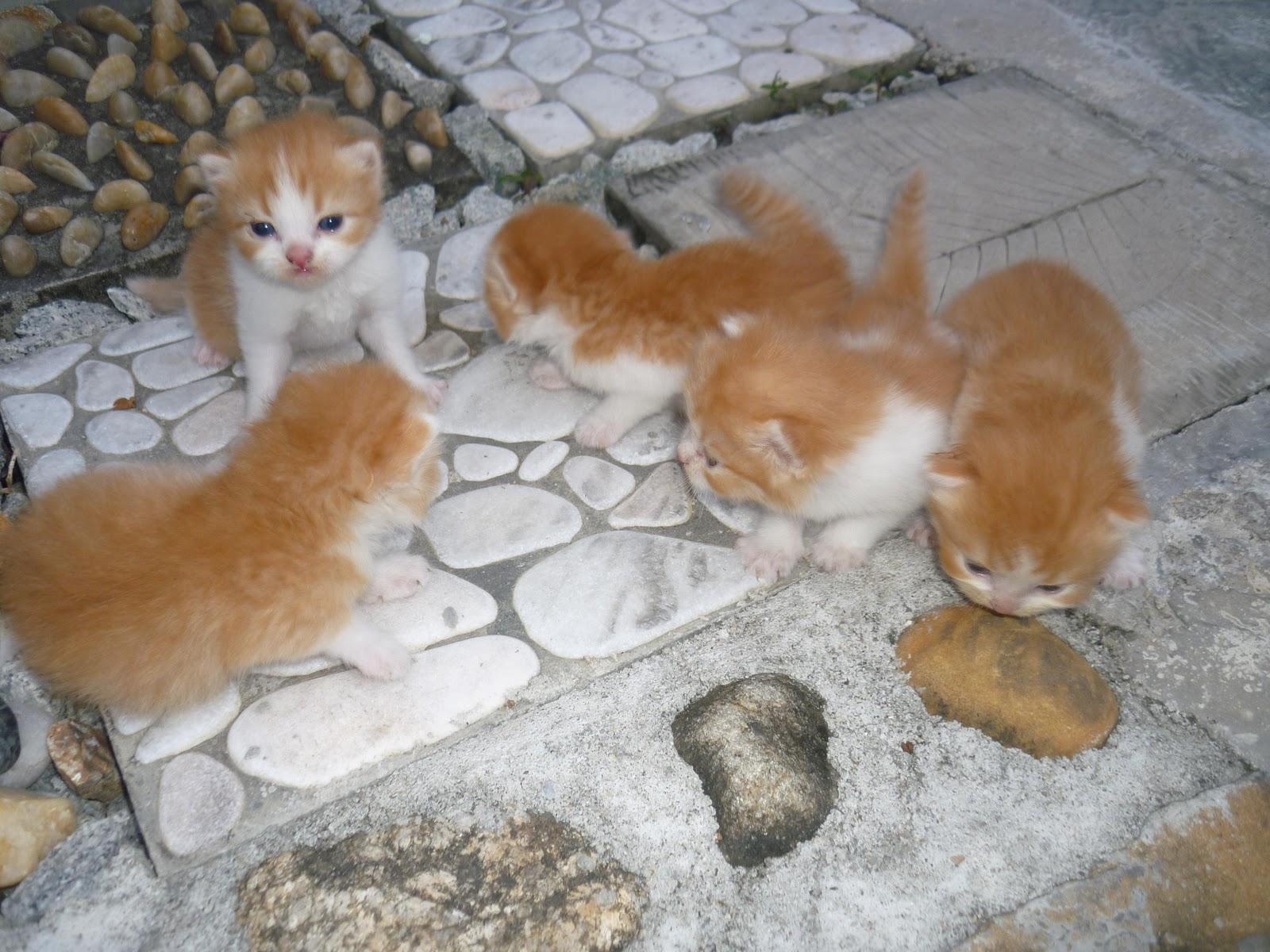 Kucing Utara Cerai Susu