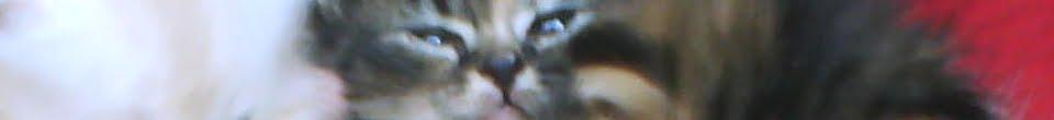 Kucing Utara