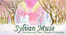 Sylvan Muse Winter Header