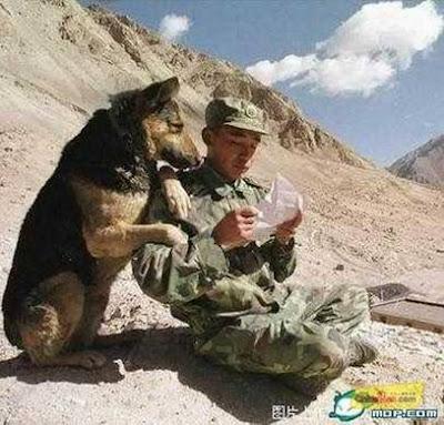 un soldat vietnamez a primit scisoare cainele sta langa el