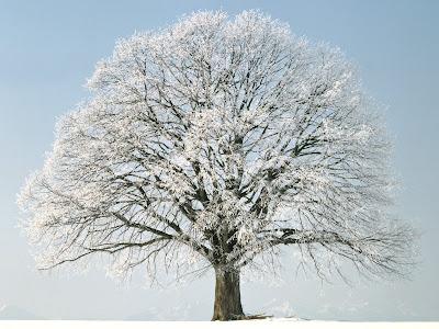 wallpaper cu un pom inghetat iarna