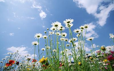 flori albe frunze