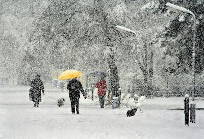 Fotografie iarna
