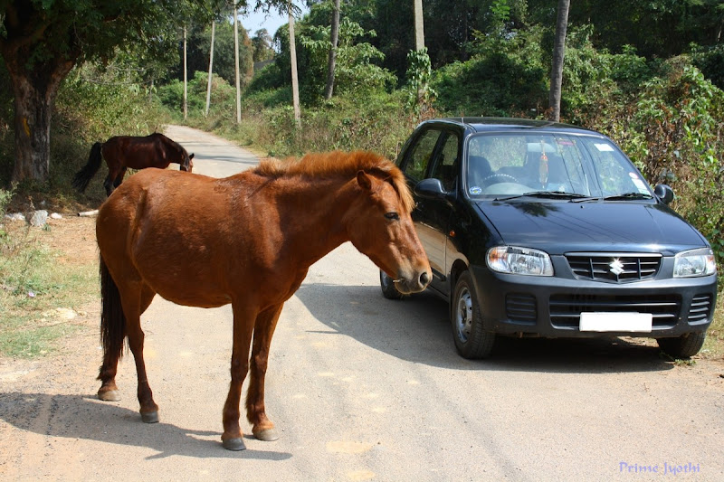 Horses and Car