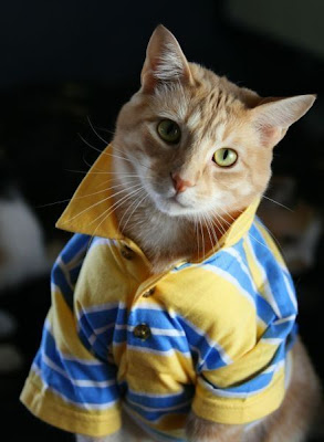 Picture of Funny Cat