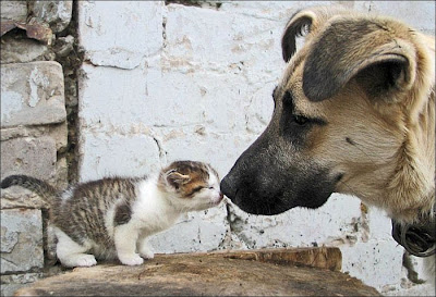 Cute Animals Funny Kissing Photo