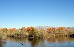 Albuquerque - Rio Grande Preserve