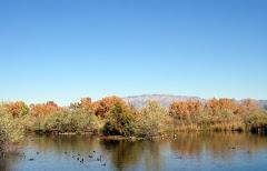 Albuquerque - Rio Grande Preserve