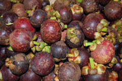MANGOSTEENS