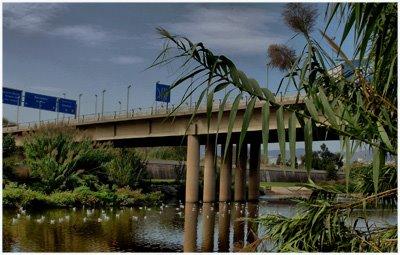 Regeneración río Besos