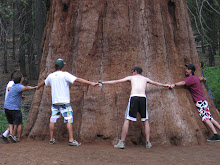 Europeans wrappund a Giant Sequoia Tree