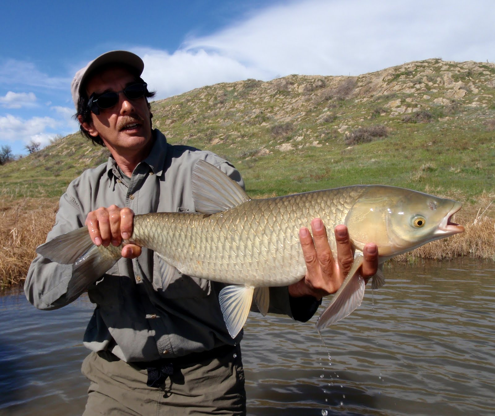Colorado fly fishing reports grassies on demand fly for Fly fishing carp