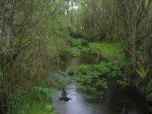 O río da Pontegrande...o meu río
