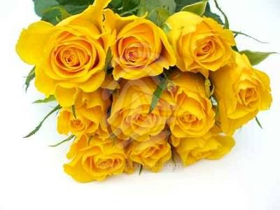 yellow roses pictures. Yellow Rose Bunch.