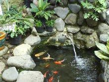 family weblog: rahasia membuat kolam ikan hias