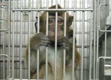 Φυλακές για αθώους??... Στα μάτια τους βλέπεις την απόγνωση ...