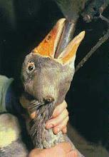 Και ο ηθοποιός Roger Moore(ο Άγιος) σε βίντεο της ΡΕΤΑ κατά του foie gras !!!