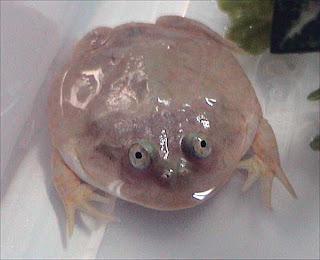 kabar--aneh.blogspot.com - 10 Jenis Hewan Amphibi Yang Unik