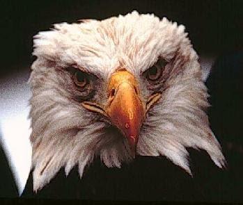 Temporary Art/Random Image comparison Thread Eagle_Face