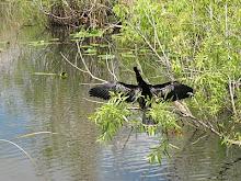 24 mars Everglades - Anhinga Trail