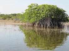 25 mars Everglades - Nine Mile Pond