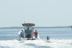 Dolphin Plays in the Boat Wake
