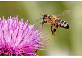 Las abejas ¡mímalas!