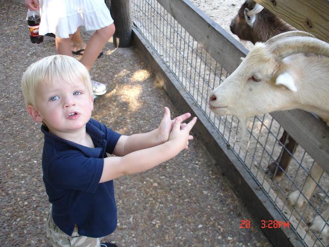 Kaden the Goat-Keeper