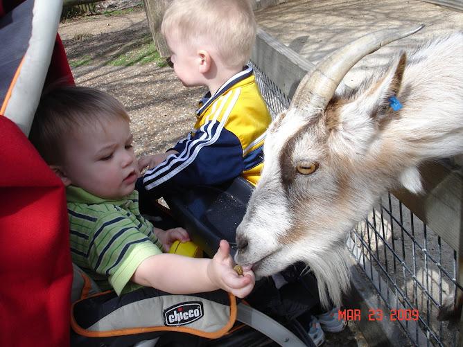 Noah, the Goat Whisperer