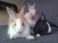 lurve bunny