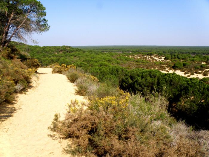 Laguna del Jaral in Doñana